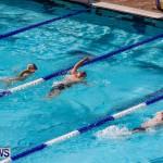 Sharks Sprint Swim Meet Bermuda, October 19, 2013-29