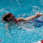Sharks Sprint Swim Meet Bermuda, October 19, 2013-50