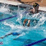 Sharks Sprint Swim Meet Bermuda, October 19, 2013-54