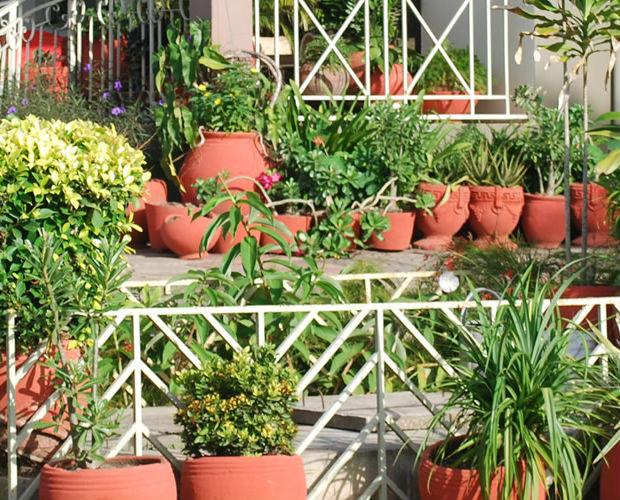 ghana-garden2
