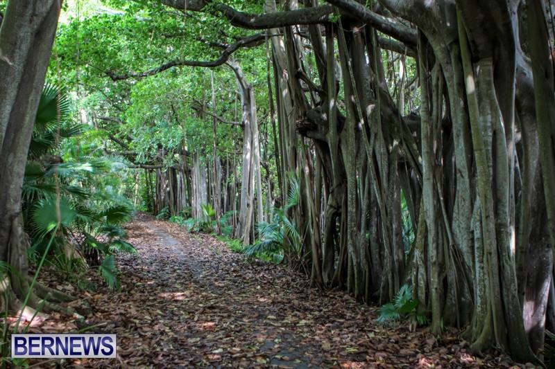 southlands-bermuda-trees