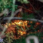 St Davids Brush Fire Bermuda, December 10 2013-17