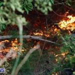 St Davids Brush Fire Bermuda, December 10 2013-19