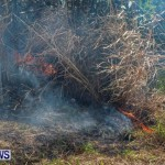 St Davids Brush Fire Bermuda, December 10 2013-3
