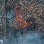 St Davids Brush Fire Bermuda, December 10 2013-4