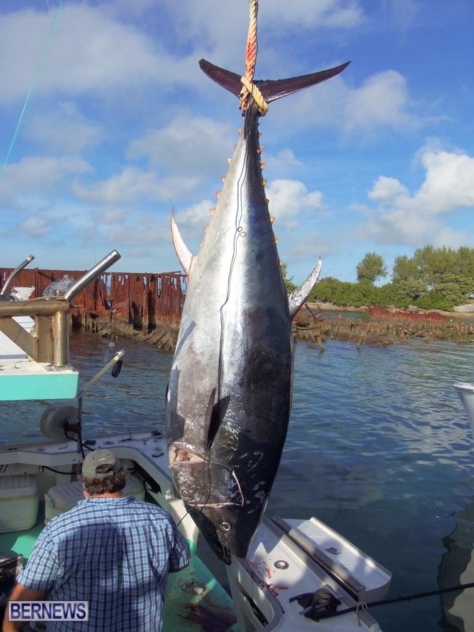 bluefin tuna bermuda dec 2013 (1)