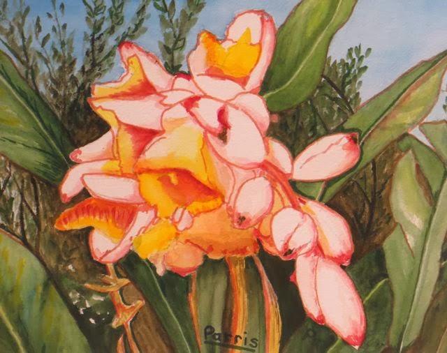 Shell Ginger Plant Irene Parris Watercolour
