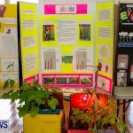 Elliot Primary School Science Fair Bermuda, Feb 26 2014-106
