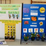 Elliot Primary School Science Fair Bermuda, Feb 26 2014-120