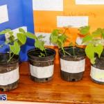 Elliot Primary School Science Fair Bermuda, Feb 26 2014-128