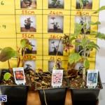 Elliot Primary School Science Fair Bermuda, Feb 26 2014-34