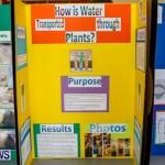 Elliot Primary School Science Fair Bermuda, Feb 26 2014-43