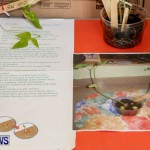 Elliot Primary School Science Fair Bermuda, Feb 26 2014-49