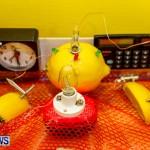 Elliot Primary School Science Fair Bermuda, Feb 26 2014-89