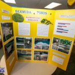 Purvis Primary School Science Fair Bermuda, Feb 26 2014-103