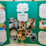 Purvis Primary School Science Fair Bermuda, Feb 26 2014-58