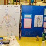 St David's Primary School Science Fair Bermuda, Feb 27 2014-11