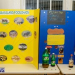 St David's Primary School Science Fair Bermuda, Feb 27 2014-20