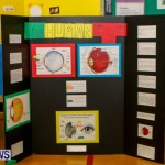St David's Primary School Science Fair Bermuda, Feb 27 2014-22
