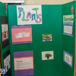 St David's Primary School Science Fair Bermuda, Feb 27 2014-27
