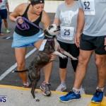 "Validus ""Running of the Bulls"" 5K Bermuda, March 30 2014-22"