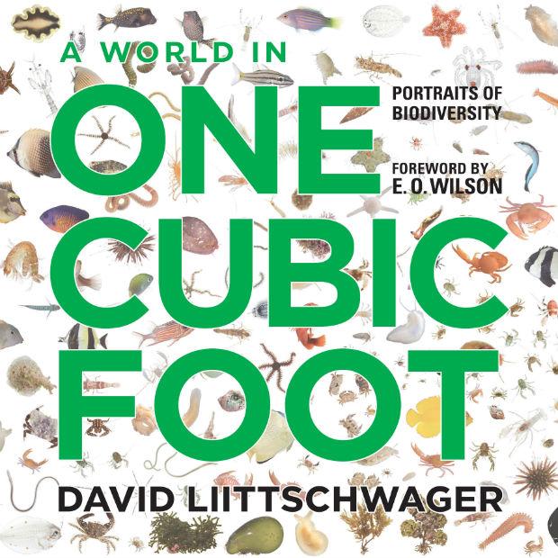 one-cubic-foot-talk
