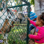 Agricultural Exhibition Bermuda, April 24 2014-14
