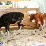 Agricultural Exhibition Bermuda, April 24 2014-17