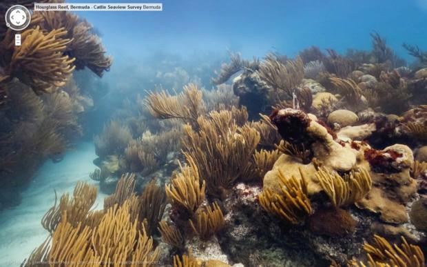 Coral Reef google bermuda