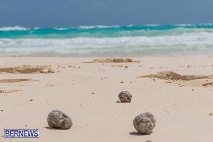 greaseballs on Bermuda beach Apr 2014 (6)