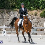 Horses Dressage Bermuda, May 3 2014-39