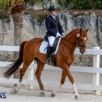 Horses Dressage Bermuda, May 3 2014-6