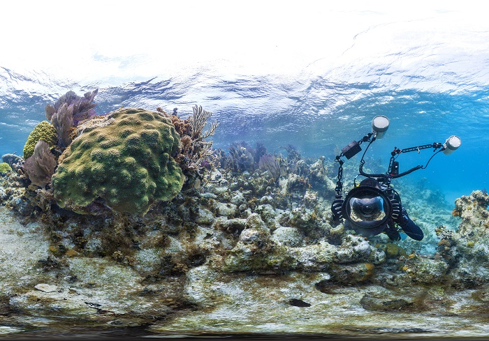 Coral Reef Image 2