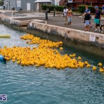 Rubber Ducky Derby Bermuda, June 1 2014-25