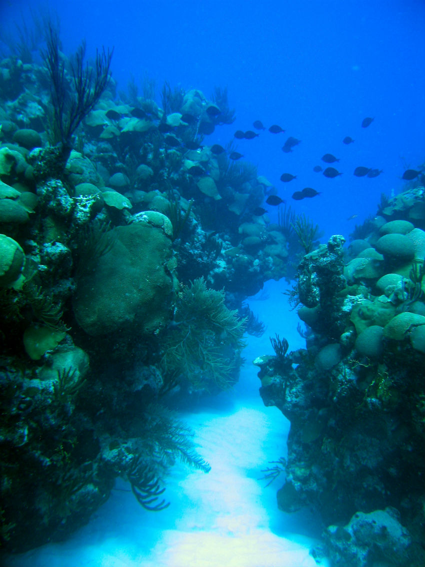 Well managed reefs with healthy corals in Bermuda 2009 (c) Thad Murdoch