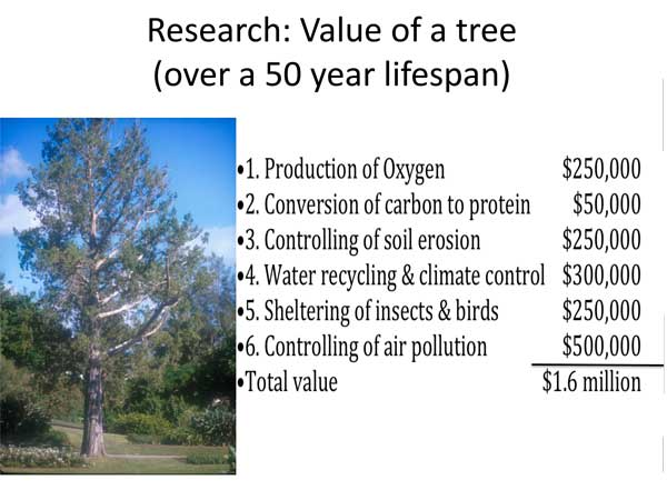Trees,-value-of