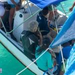 ocean vet turtle tagging aug 2014 (1)
