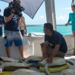 ocean vet turtle tagging aug 2014 (12)