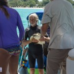 ocean vet turtle tagging aug 2014 (2)