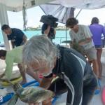 ocean vet turtle tagging aug 2014 (9)