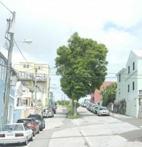 trees ewing street bermuda