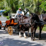 Blessing Of The Animals Service Bermuda, October 5 2014-1