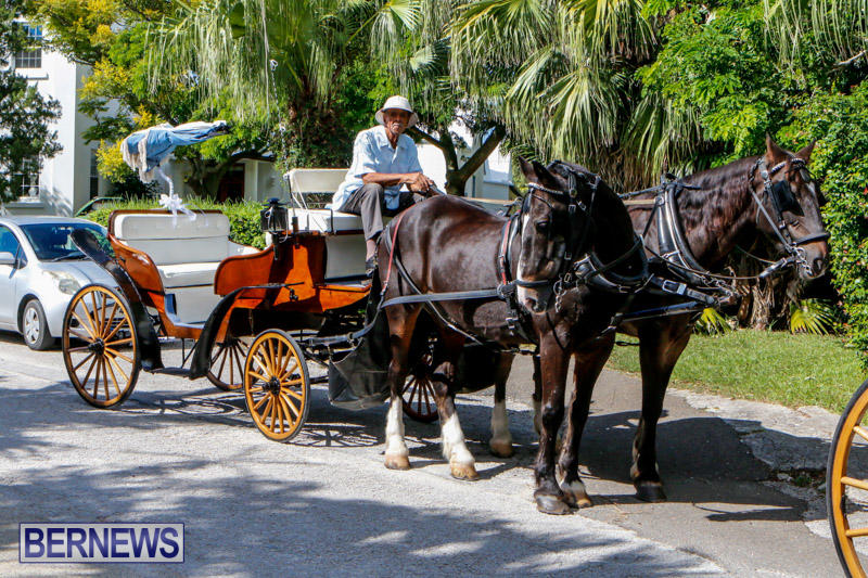 Blessing-Of-The-Animals-Service-Bermuda-October-5-2014-1