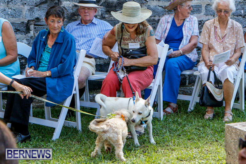 Blessing-Of-The-Animals-Service-Bermuda-October-5-2014-17