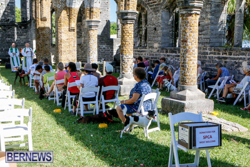 Blessing-Of-The-Animals-Service-Bermuda-October-5-2014-24