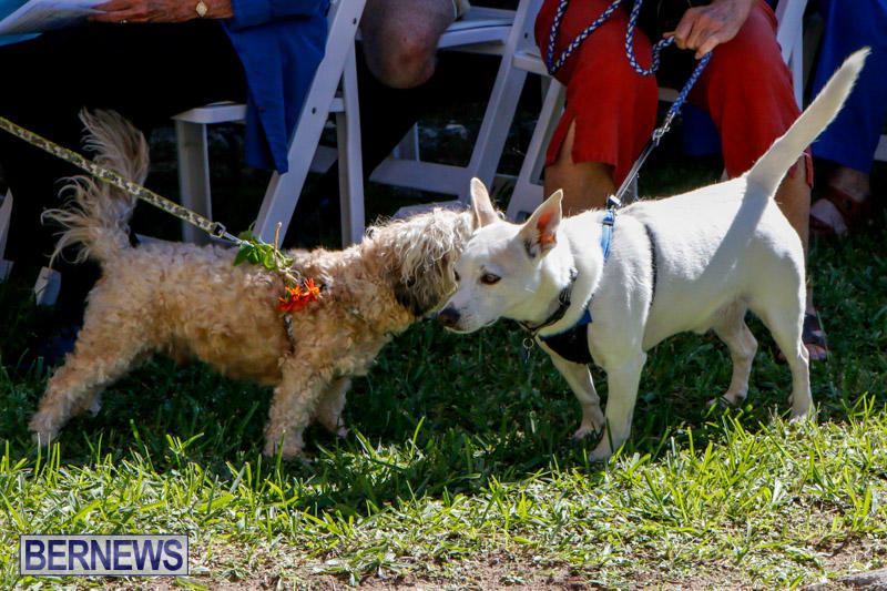 Blessing-Of-The-Animals-Service-Bermuda-October-5-2014-26