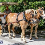 Blessing Of The Animals Service Bermuda, October 5 2014-3