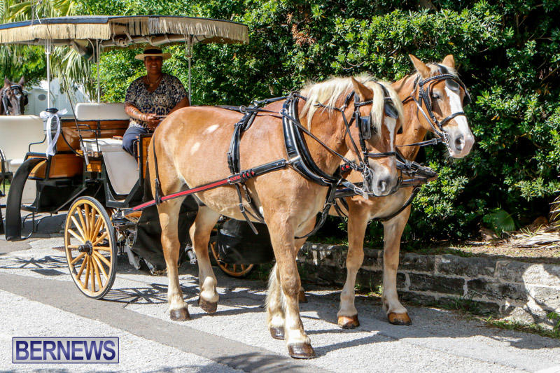Blessing-Of-The-Animals-Service-Bermuda-October-5-2014-3