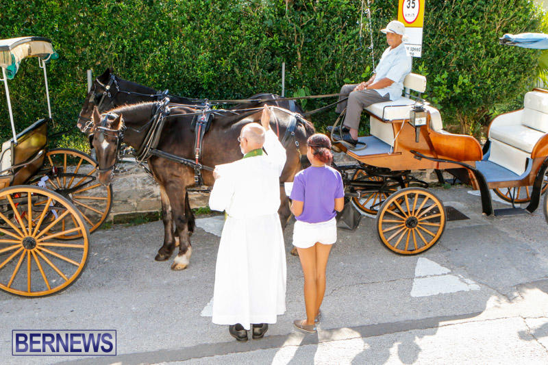 Blessing-Of-The-Animals-Service-Bermuda-October-5-2014-31