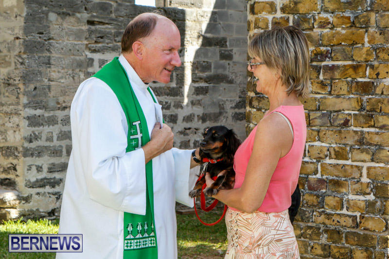 Blessing-Of-The-Animals-Service-Bermuda-October-5-2014-32